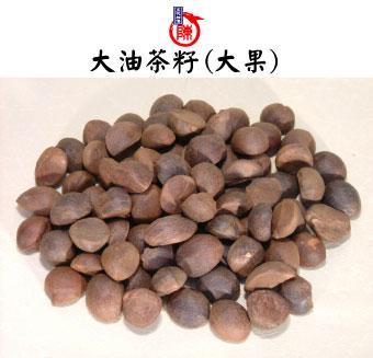 茶油,苦茶油-大油茶籽(大果)